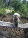 小狗在森林 免版税库存照片