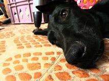 小狗在非常美好的休息 免版税图库摄影