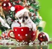 小狗在Santa& x27; s帽子 免版税库存图片