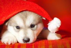 小狗坐在圣诞老人帽子的红色背景 库存照片