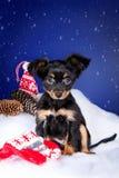 小狗坐在雪的玩具狗 图库摄影