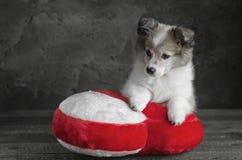 小狗坐枕头以心脏的形式 免版税库存照片