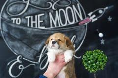 小狗小狗在图片背景的手上 免版税库存图片