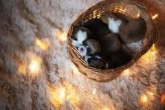 小狗小狗/与小狗小狗的小狗/演播室会议 免版税库存图片