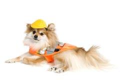 小狗工作员 免版税库存图片