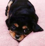 小狗年轻人 图库摄影