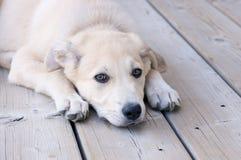 小狗年轻人 免版税库存图片