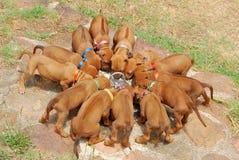 小狗废弃物  免版税图库摄影