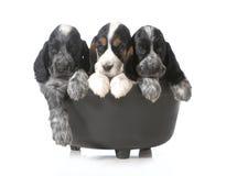 小狗废弃物  免版税库存照片