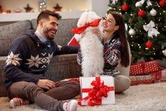 小狗当女朋友的圣诞节礼物 库存图片