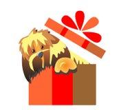 小狗惊奇 在礼物盒的狗 免版税库存图片