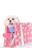 小狗愉快的搬运旅行 免版税库存图片