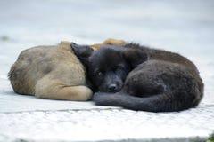 小狗放松作为 库存图片