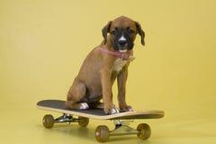 小狗滑冰 图库摄影