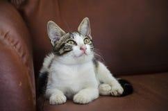 小狗猫和宠物疗法 免版税库存图片