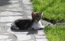 小狗猫 免版税库存图片