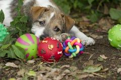 小狗玩具 库存照片