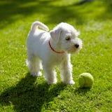 小狗白色 免版税库存图片