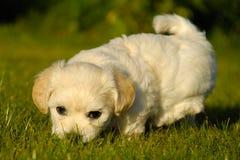 小狗白色 免版税库存照片