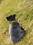 小狗的后面外形 免版税库存图片