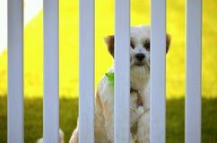 小狗监狱 免版税图库摄影