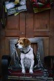小狗被囚禁在胳膊椅子 免版税图库摄影