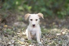 小狗逗人喜爱愉快滑稽和可爱 库存照片
