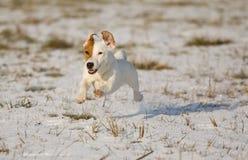 小狗雪 图库摄影