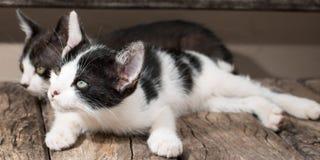 小狗黑白猫 免版税图库摄影