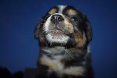 小狗鼻子的特写镜头 免版税库存照片