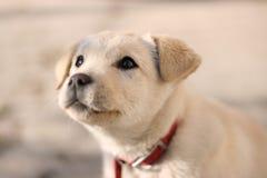 小狗 图库摄影
