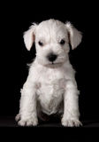 小狗 免版税库存照片