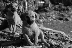 小狗 免版税库存图片