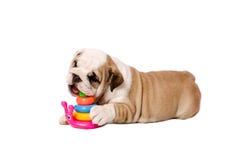 小狗 免版税图库摄影