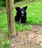 黑小狗 库存照片