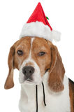 小猎犬圣诞节 免版税库存图片