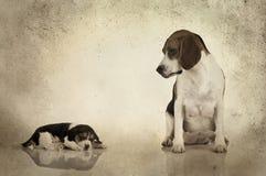 小猎犬妈妈 免版税库存照片