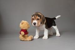 小猎犬小狗和玩具 免版税库存图片