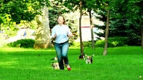 小猎犬横跨草夏日尾随赛跑 影视素材