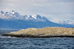 小猎犬海峡阿根廷 免版税库存图片