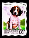 小猎犬(天狼犬座familiaris),狗serie,大约1998年 库存照片