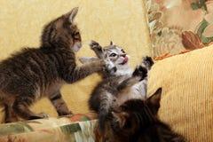 小猫一点三 免版税库存图片