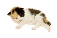 小猫一点疲倦了 免版税库存照片