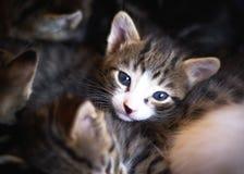 小猫一点 免版税图库摄影