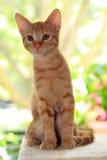 小猫一点 库存照片