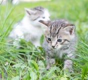 小猫一点 免版税库存图片