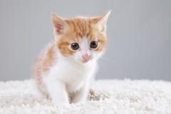 小猫一点 库存图片
