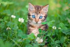 小猫一点 图库摄影