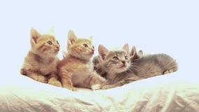 小猫一点 股票视频
