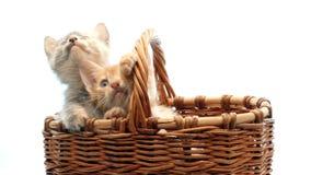 小猫一点 股票录像
